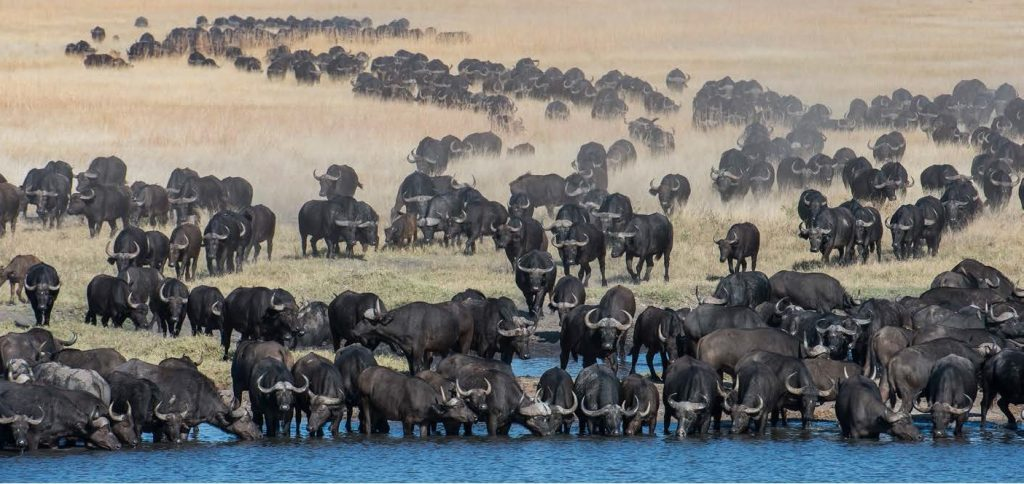 Hwange National Park - 10 places to visit in Zimbabwe