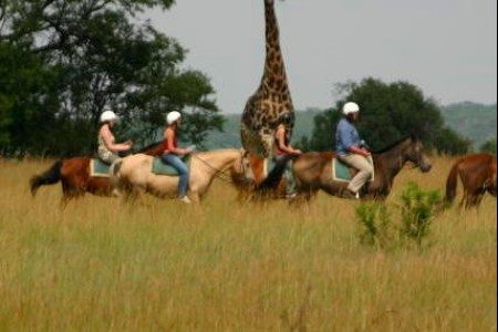 Riding-horses-Antelope-Park-Lion-Breeding-and-Rehabilitation-in-Zimbabwe 10+ Incredible Places to visit and Things to do in Zimbabwe