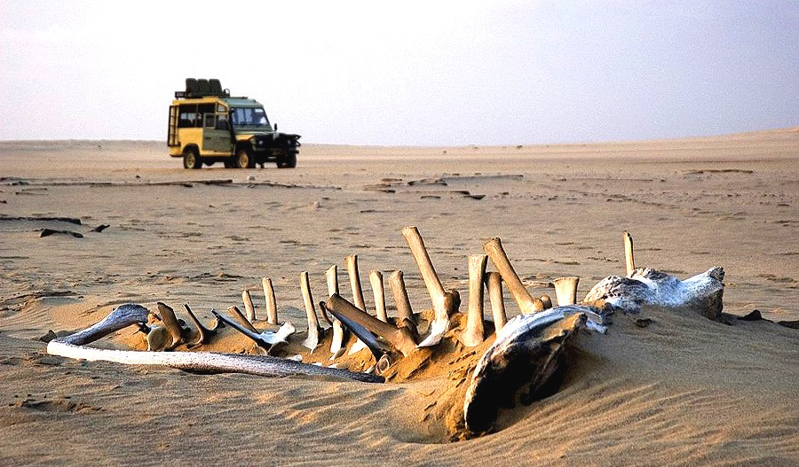 Skeleton-Coast-Skull Namibia Itinerary: 25 Incredible Things to Do in Namibia