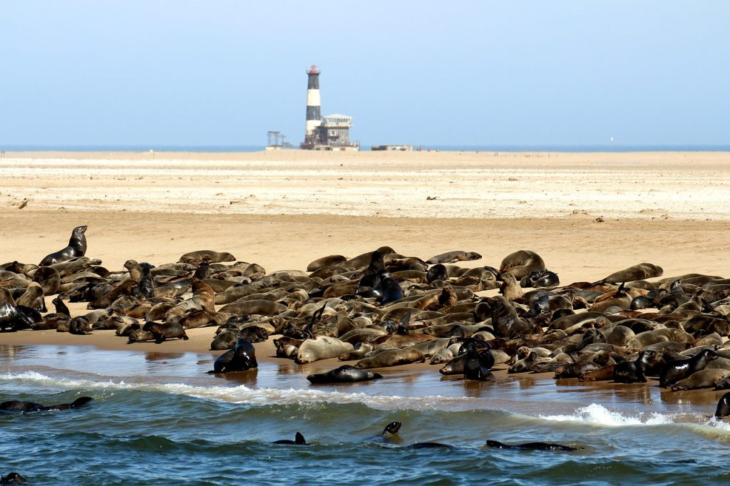 seals-1972564_1280-1024x682 25 Incredible Places and Things to Do in Namibia and to see