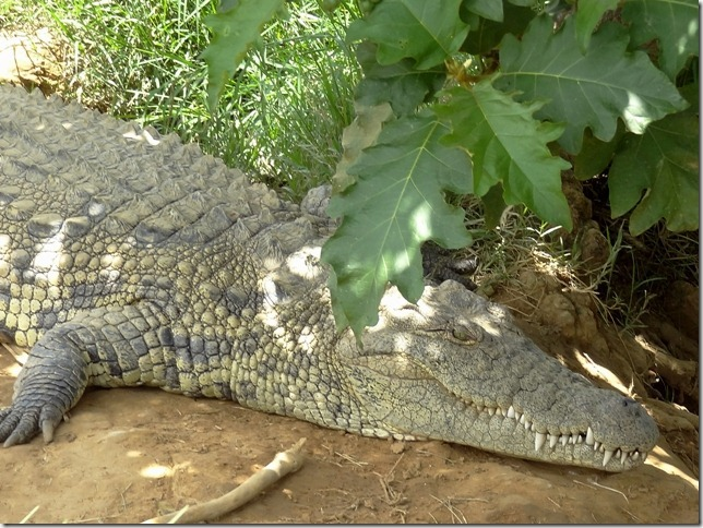 Kalimba_Reptile_Park-18_thumb1_thumb 30+ Amazing Places And Things to do In Zambia and things to see