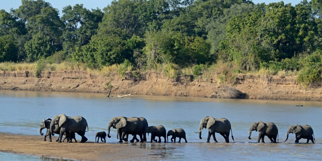 Loxodonta_africana_South_Luangwa_National_Park_2-1024x512 Zambia Itinerary 30+ Amazing Places And Things to do