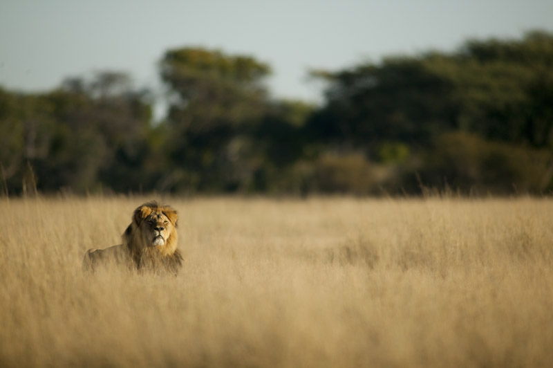 From Cecil, the Lion's Killing to Xanda