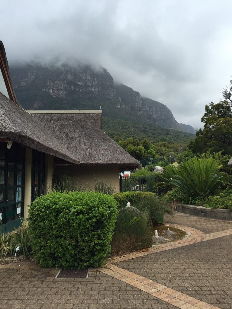 kirstenbosch-987514_1280-768x1024 5+ Fascinating Things to Do in CapeTown