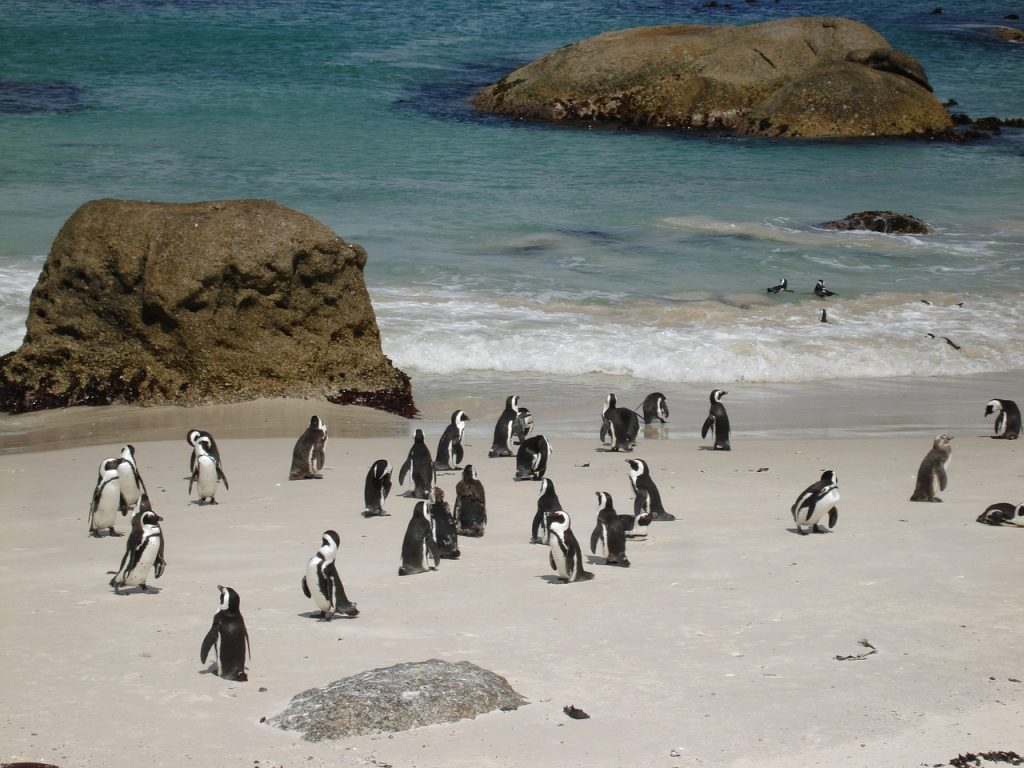 penguins-1880709_1280-1024x768 5+ Fascinating Things to Do in CapeTown