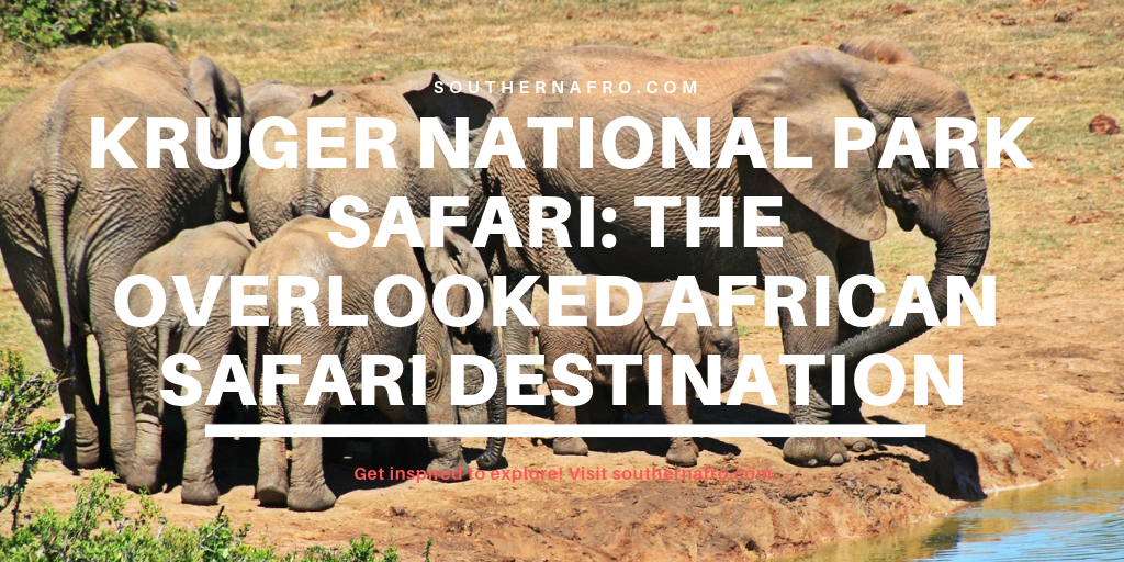 Kruger National Park Safari: The Overlooked African Safari Destination
