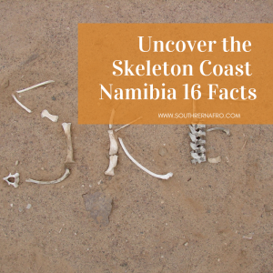 Uncover-the-Skeleton-Coast-Namibia-16-Facts-300x300 Uncover the Skeleton Coast Namibia: 16 Key Facts