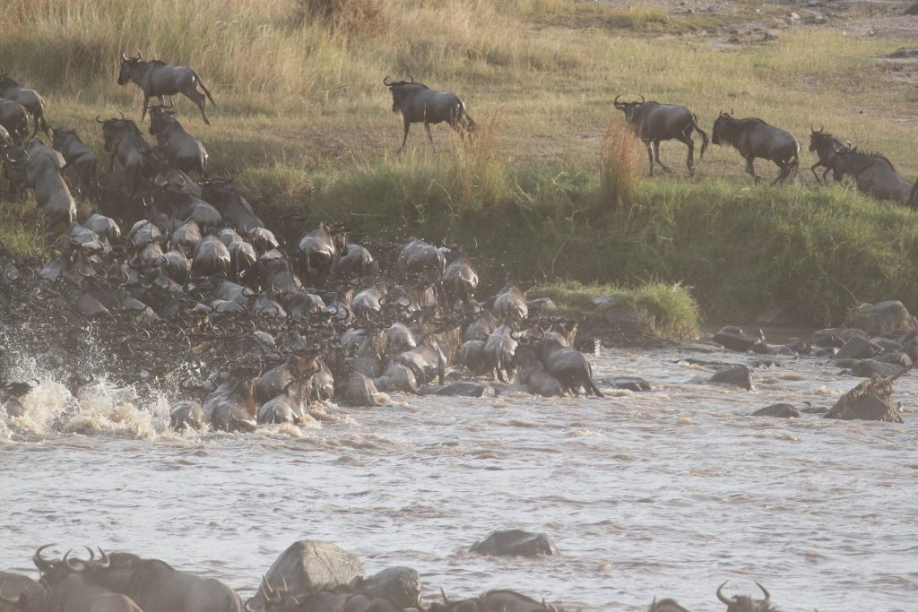 wildebeest-migration-2322111_1920-1024x683 The Great Serengeti Migration: + Free 11 Point Checklist